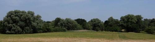 Schafweidewiesen mit alten Weiden