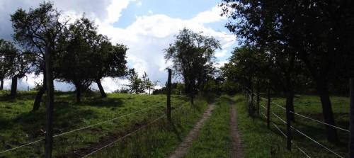 Abstieg vom Buckower Schlossberg