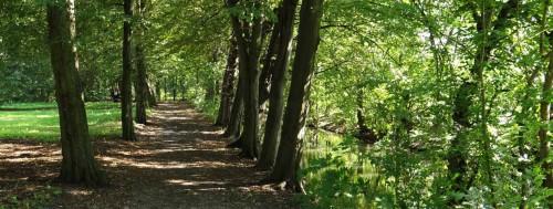 Buchenallee im Naturpark Wollup
