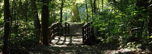 Szenen aus dem Märchenfilm: Brücklein im Walde