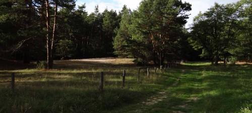 An der Düne zwischen Alter Mühle und Münchehofe