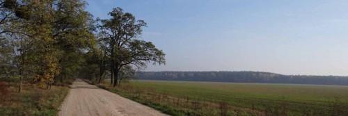 Robinienallee von Buchholz zur Wesendahler Heide
