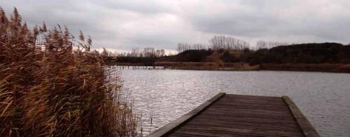 Steg am Fischweiher
