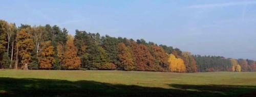 Waldfeld in der Wesendahler Heide