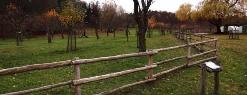 Obstgarten am Schlosspark, Criewen