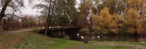 Spreebrücke mit Schwanenfamilie
