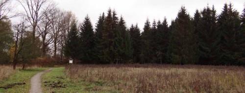 Fichtenwald an der Streuostwiese auf dem Barzlin