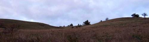 Südaustralische Wiesenhügel bei Stützkow