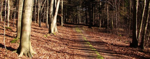 Waldweg unweit des Sees