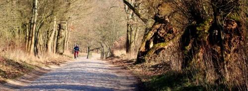 Alte Allee nach Hohenwalde