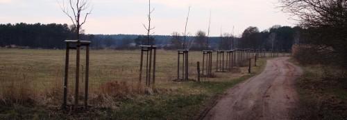 Apfelbaumallee vor Rieben
