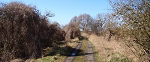 Von der Ucker Richtung Vossberg