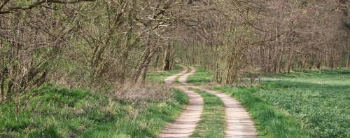 Robinienwald auf dem Weg zum Göttinsee