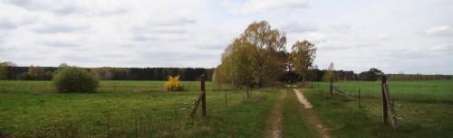 Vom Wald der Dubrow Richtung Pätz