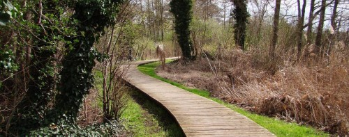 Plankenweg am Ufer in Töplitz