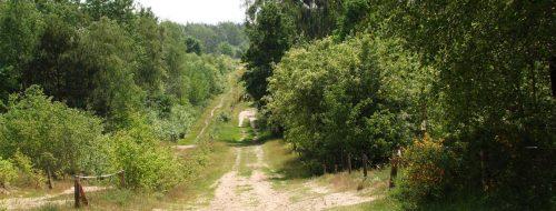 Wellenreicher Hauptweg in der Döberitzer Heide