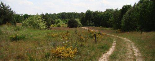Blumiger Grasweg am Hasenheider Berg