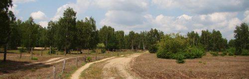 Sandiger Weg entlang des Wildniskernzone