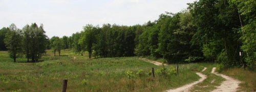 Schöner Waldrandweg am Grunde