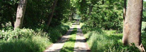 Schattige Straße durchs die Sernitzniederung