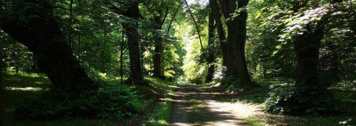 Wohltuender Schatten im Görlsdorfer Lenné-Park