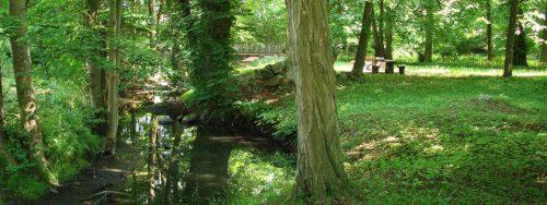 Die Welse im Park, Görlsdorf