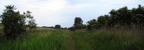 Weg entlang der Sernitzwiesen südlich von Greiffenberg
