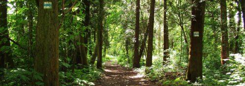 Waldpfad am Mühlenfließ