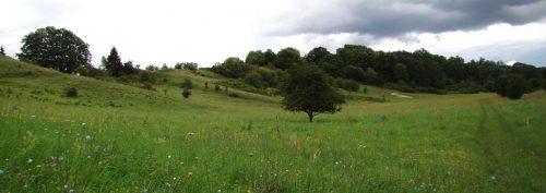 Sanfte Hügel im Schäfergrund