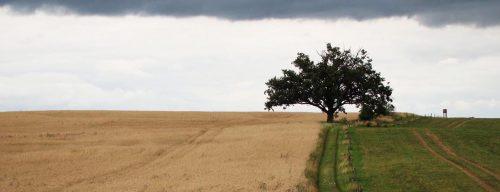 Weg über die Felder nach Cöthen