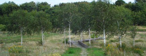 Birkenplateau am Fuße des Holzsofas