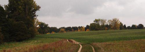 Im Wiesengrund