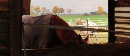 Herbstliche Pferde am Reiterhof nördlich der Stadt