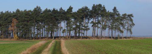 Eine einsame Brücke später - fast derselbe Wald, fast dieselbe Zeit, andere Ausrichtung