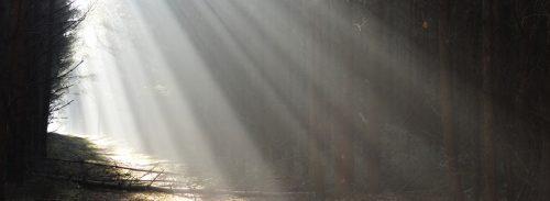 Strahlenfächer im Nadelwald zwischen Herzsprung und Ganz