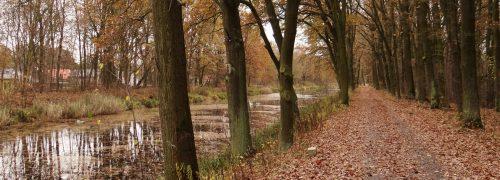 Herbstlicher Radweg entlang des Oranienburger Kanals, Oranienburg