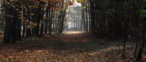 Haus am Waldrand, Ganz
