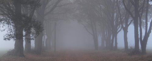 Eichenallee im aufziehenden Nebel, bei Kattenstiegsmühle