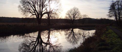 Filigrane Baumkronen am Kanal, bei Försterei Kahlenberg